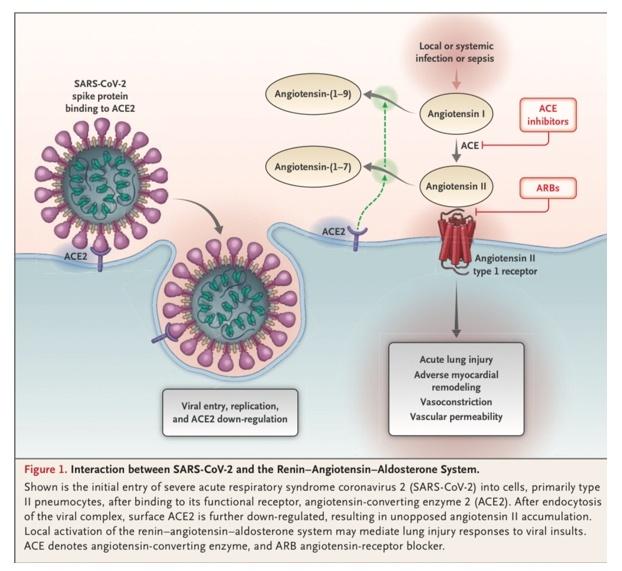 Coronavirus und Blutdrucksenker: Was Sie jetzt wissen müssen