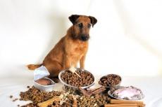 Futtermittelallergie bei Hund und Katze: Symptome