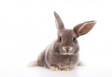 Kaninchenschnupfen (Pasteurellose) - Was ist das und was hilft dagegen?