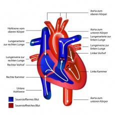 Herzinnenhautentzündung: Ursachen, Symptome und Behandlung