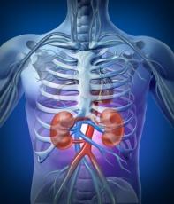 Wie die Nieren den Körper entgiften