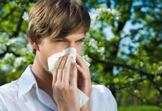 SCIT/SLIT: Neue Tabletten-Therapie der Baumpollenallergien