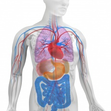 Eiweiß im Blut - Was tun, wenn zu viel oder zu wenig Eiweiß im Blut ist?
