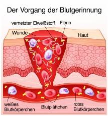 Biologische Eigenschaften der Thrombozyten (Platelets)