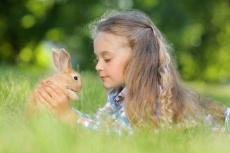 RHD-2-Viren sind für Kaninchen lebensgefährlich! Das sind die Symptome und Übertragungswege