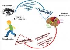 Sensomotorische Amnesie: Mögliche Symptome