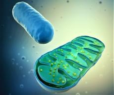 Entstehung chronischer Erkrankungen – ein Mitochondrien-Problem?