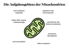 Mitochondrien und COVID-19: Das sind die Zusammenhänge