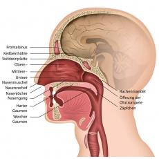 Brennende Schmerzen und Schluckbeschwerden - Symptome einer Kehlkopf- oder Rachenentzündung?