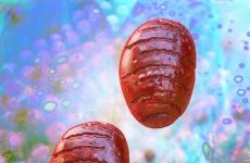 Mittleres Zellvolumen (MCV): Was tun bei erhöhten Laborwerten im Blutbild?